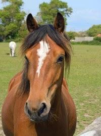 Jax.2014-05.Horse